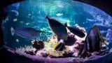 L'Aquarium Abyssal